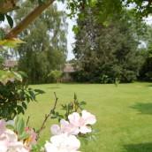 hopes-bed+breakfast-norton-sub-hamdon-back-garden-flowers